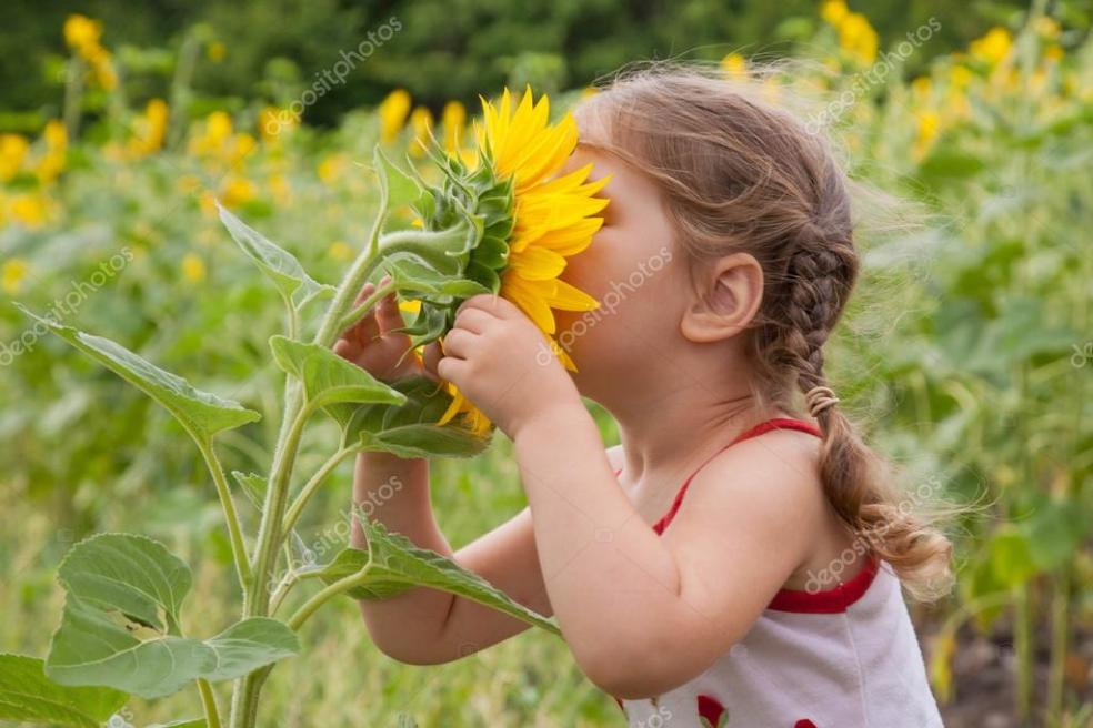 depositphotos_11651877-stock-photo-baby-smelling-a-big-sunflower